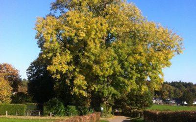 Bäume und Radwege